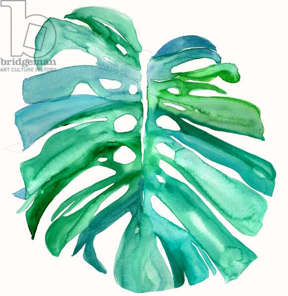 Monstera Leaf, 2015, watercolour
