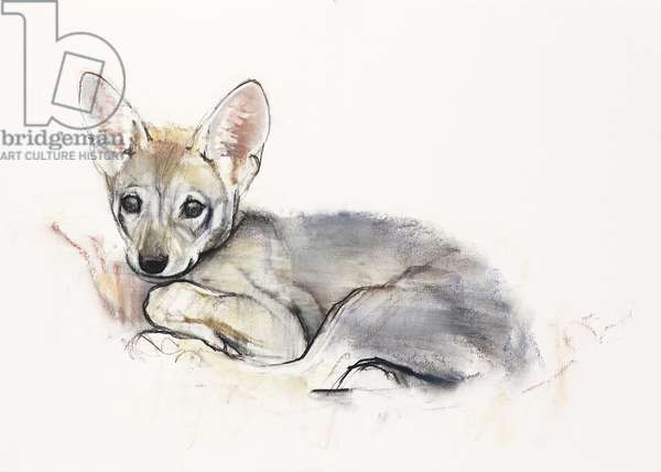 Curled Arabian Wolf Pup, 2009 (conte & charcoal on paper)