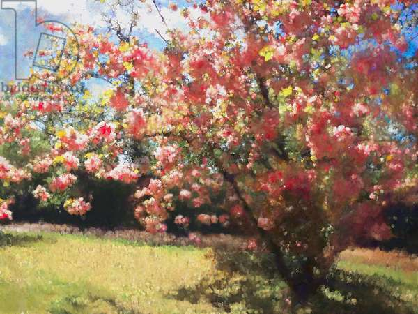 Cherry Blossom, 2018, (painting)