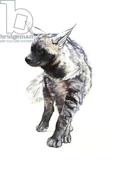 Striped Hyaena Pup, 2010, (conté and pastel on paper)