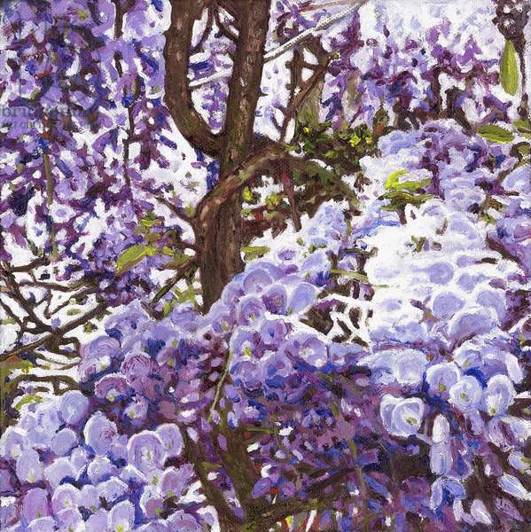 Blue wisteria, 2011, (oil on canvas)