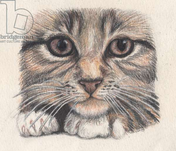 Tabbycat Face, 1990 (coloured pencil)