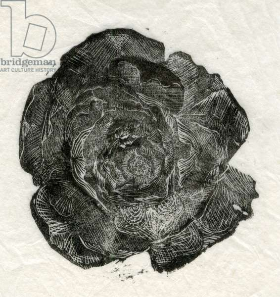 Pine Rose, 2014, (wood engraving on paper)