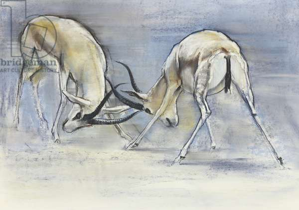 Sand Gazelles, 2009 (conte & charcoal on paper)
