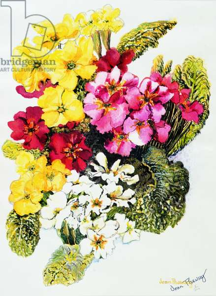 Primroses,White,Yellow,Pink and Red, 2000,(watercolour)