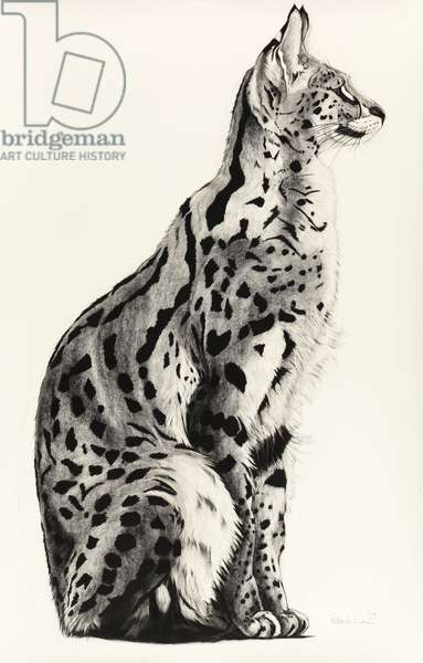Serval, 2009 (charcoal on paper)