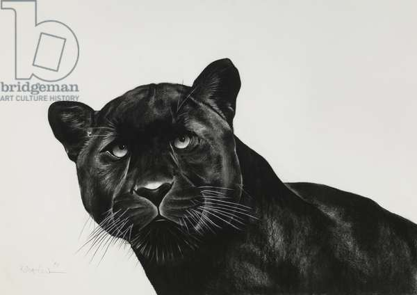 Black Panther, 2015, (Charcoal on paper)