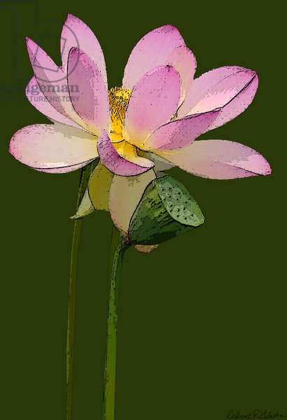 Lotus Blossom, 2012, (mixed media/digital)