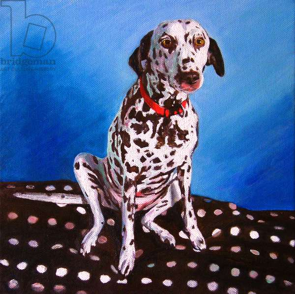 Dalmatian on spotty cushion, 2011, (oil on canvas)