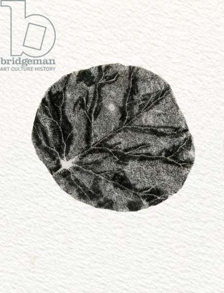 Leaf, 2014, (wood engraving on paper)