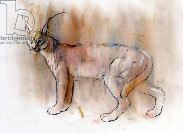 Arabian Caracal, 2009 (conte & charcoal on paper)
