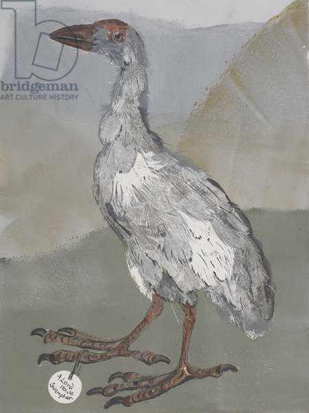 Swamphen, 2007, mono print on paper