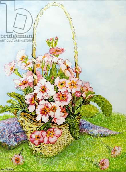 Pink Primroses in a Florist's Basket with a Paisley Scarf,2010,watercolour