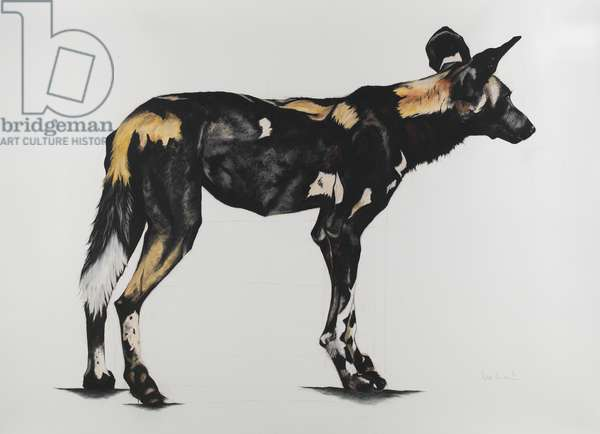 Large African Wild Dog III, 2015 (charcoal and pastel on paper)