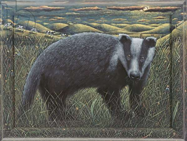 BADGER, 2013, (tinted gesso on canvas)