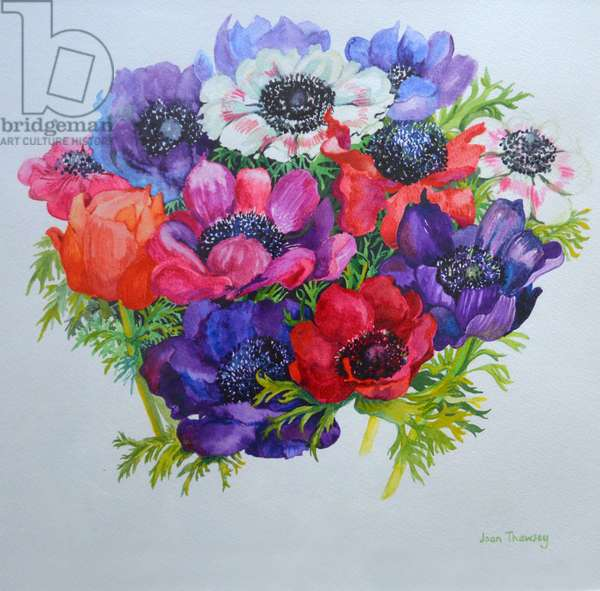 Anemones: red, white, pink and purple, 2000,(watercolour)