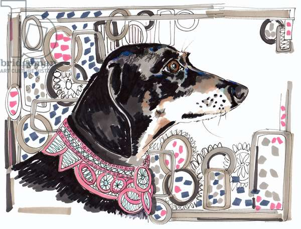 Lacey The Dachshund, 2013, (pen, ink on paper)