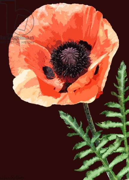 Orange Poppy, 2012, (mixed media/digital)