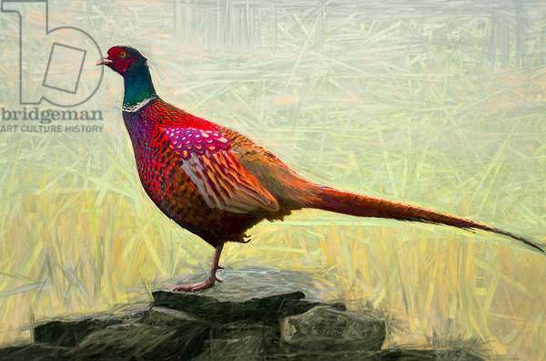 Pleasant Pheasant, 2018, (mixed media)