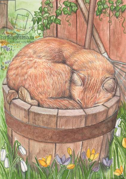 Ginger Cat Asleep, 1995 (watercolour and pencil)