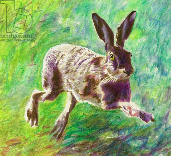 Joyful hare, 2011, (coloured pencil on paper)