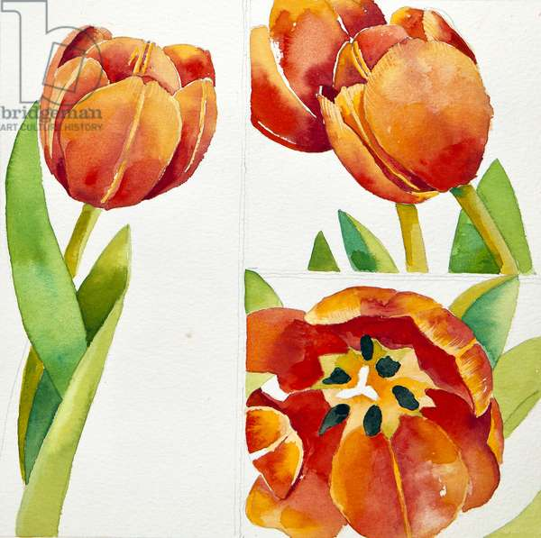 Three tulip studies in a sure, 2013, (watercolour)