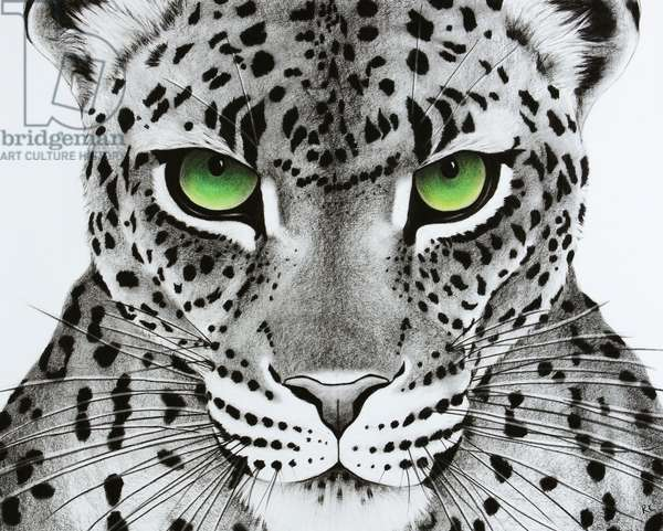 Green Eyed Leopard, 2018, (pastel and charcoal on paper)