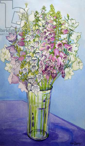 Foxgloves and Campanulas,2005 (watercolour)