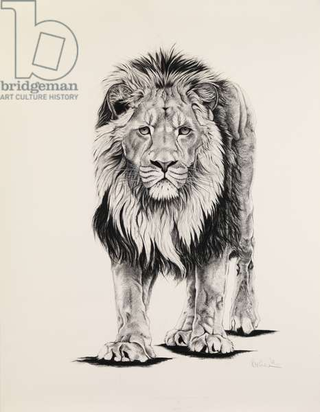 Aslan, 2006, (charcoal on paper)