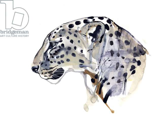 Profile (Arabian Leopard), 2008 (w/c on paper)