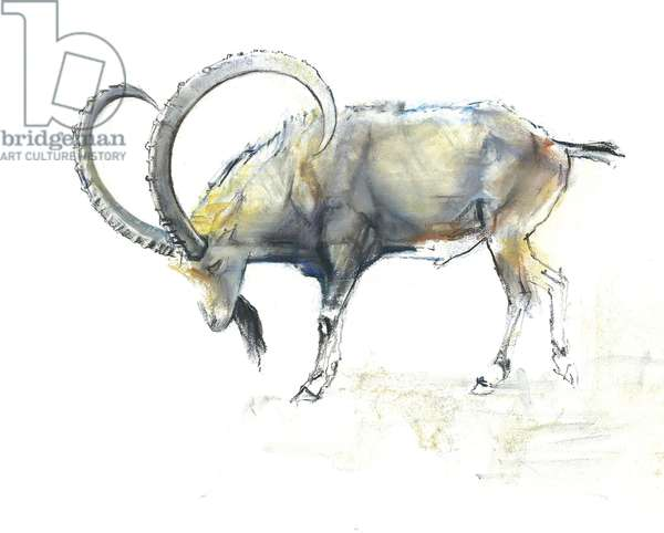 Nubian Ibex, 2008 (conte & charcoal on paper)