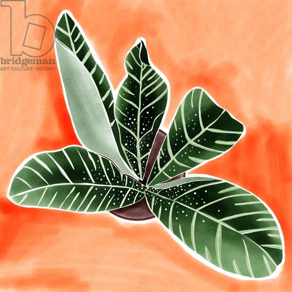 Calathea, 2019, digital