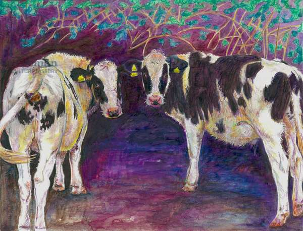 Sheltering cows, 2011, (coloured pencil on paper)