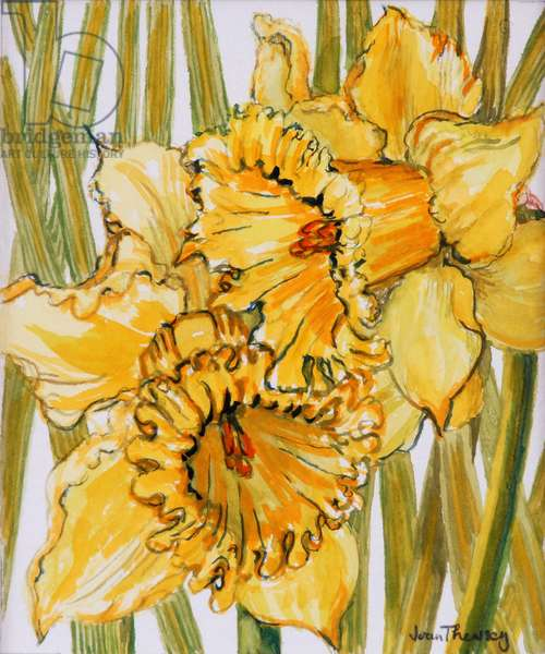 Two Daffodils,2001,water colour on hand made paper