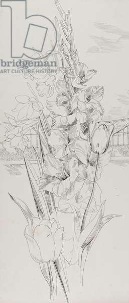 A sheaf of flowers, 1955 (pen & ink on paper)
