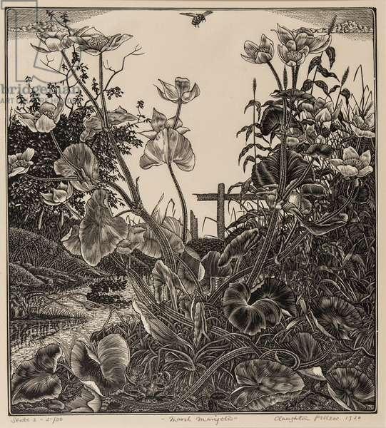 Marsh Marigolds, 1930 (wood engraving)