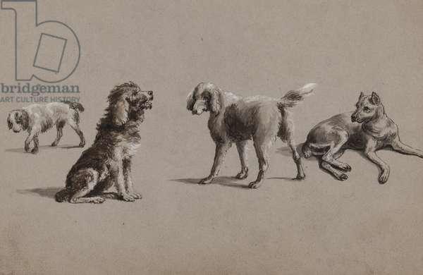 Studies of dogs (pen, brush, ink & gouache on paper)