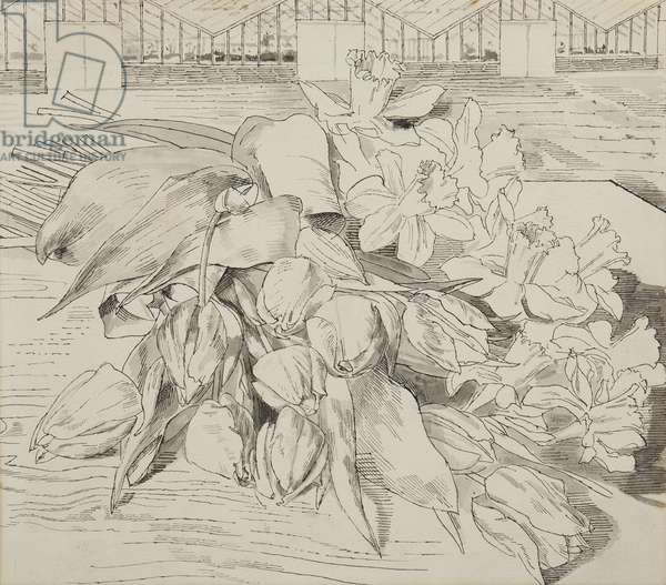 Tulips and daffodils, 1955 (pen & ink on paper)
