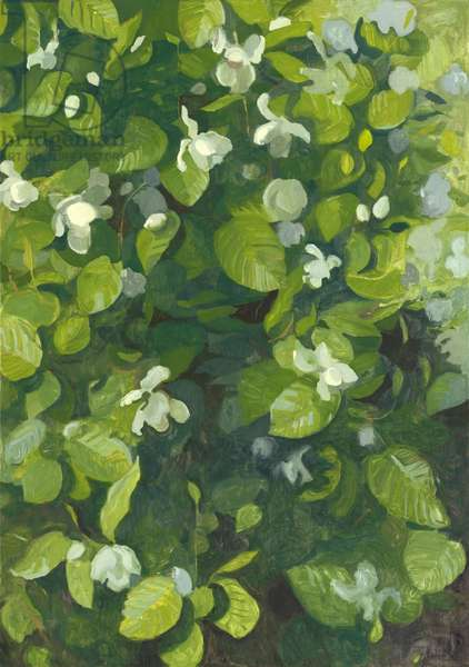 Magnolia in flower, 2014 (oil on canvas)