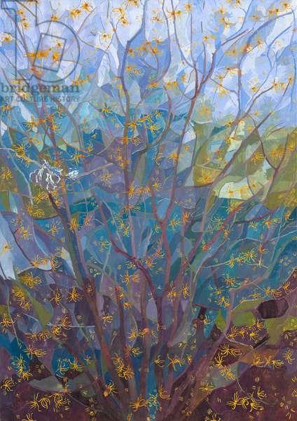 Witch Hazel in Flower, 2015 (oil on canvas)
