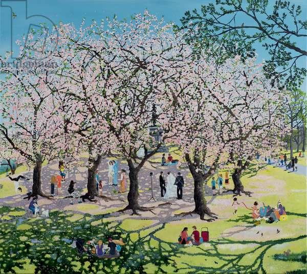 Cherry blossoms Sakura, 2020 (oil on canvas)
