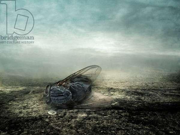 Fly, 2013, (Photo manipulation)