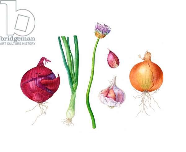 Alliums 2