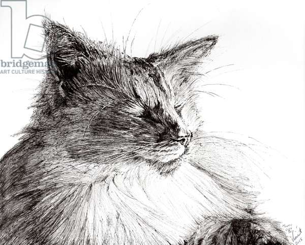 Monty cosy boy, 2015, (ink on paper)