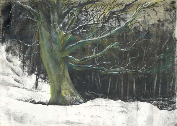 Tree in winter snow at Osmotherley woods, 1997, (pastels on paper)