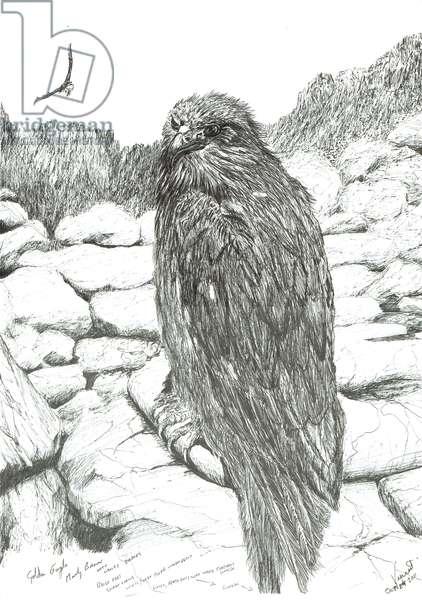 Eagles of the Highlands, 2011, (ink on paper)