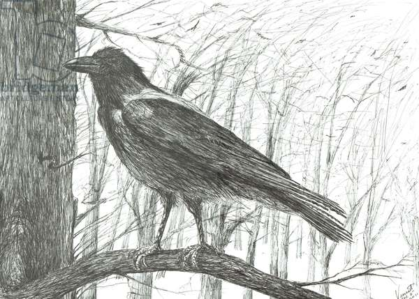 Bird, 2011, (ink on paper)