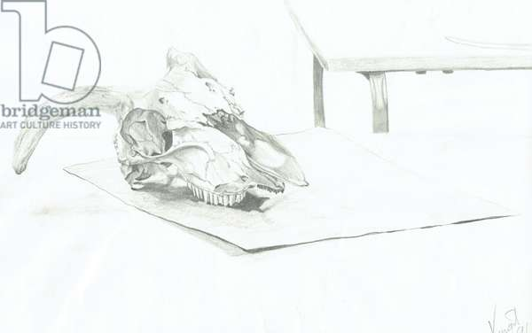 Skull, 1996, (pencil on paper)