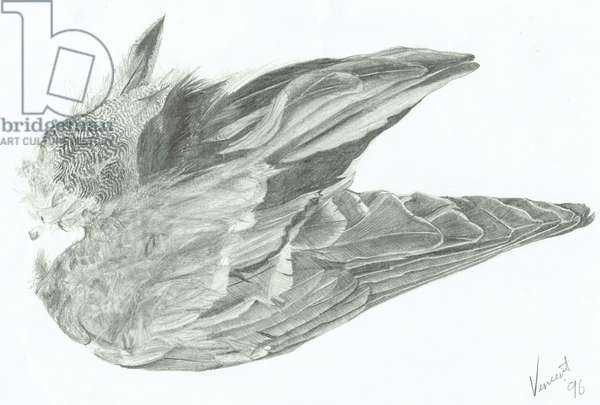 Wing, 1996, (pencil on paper)