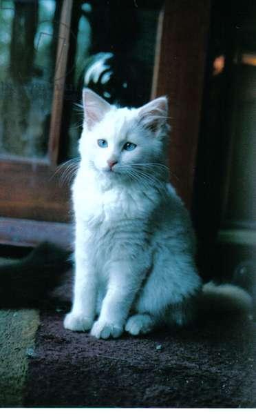 Ice kitten, 2006, (photograph)